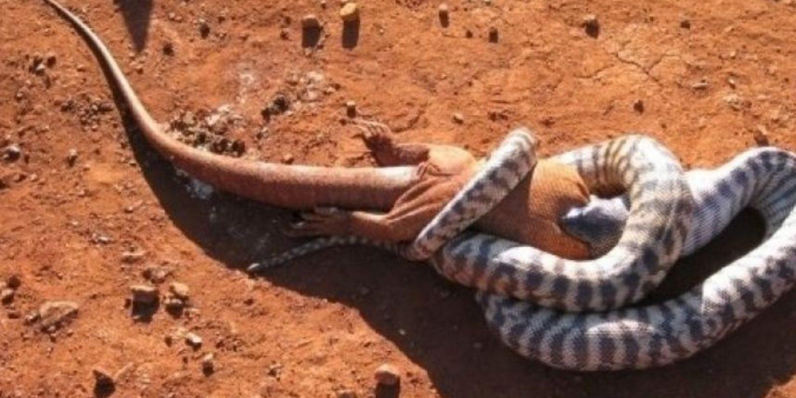 Serpientes alimentándose. Foto:Reddit