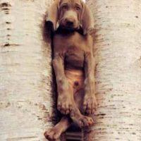 Los perros pueden hacernos pasar grandes enojos por sus travesuras. Foto:Funnyfreepics