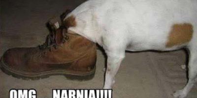 Cuando se comen nuestros zapatos Foto:Tumblr.com/tagged/perros-aprietos