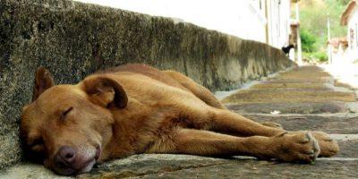 Organizaciones como Humane Society International buscan diariamente luchar por los derechos de estos animales. Foto:Wikimedia