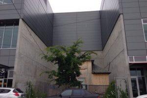 En 2006, los compradores le ofrecieron hasta un millón de dólares a Edith por su casa Foto:Yelp