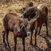 La noticia de que este animal procedente de Baja California en México se dio a conocer en el diario mexicano La Crónica. Foto:Pixabay