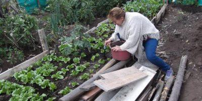 La huerta es solo uno de los proyectos con que la Fundación Monterrey Ecohídrico motiva a cultivar el medio ambiente Foto:Foto tomada de Facebook Fundación Monterrey Ecohídrico