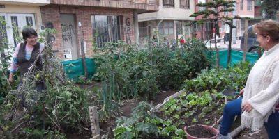 Los vecinos ayudan a cultivar en la huerta Foto:Foto tomada de Facebook Fundación Monterrey Ecohídrico