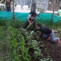 Cultivo en el parque Monterrrey de lechuga, acelga, espinaca, cebolla y cilantro Foto:Foto tomada de Facebook Fundación Monterrey Ecohídrico