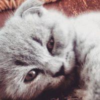 Foto:instagram.com/catselfie_vk