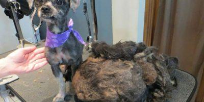 Después Foto:Trio Animal Foundation