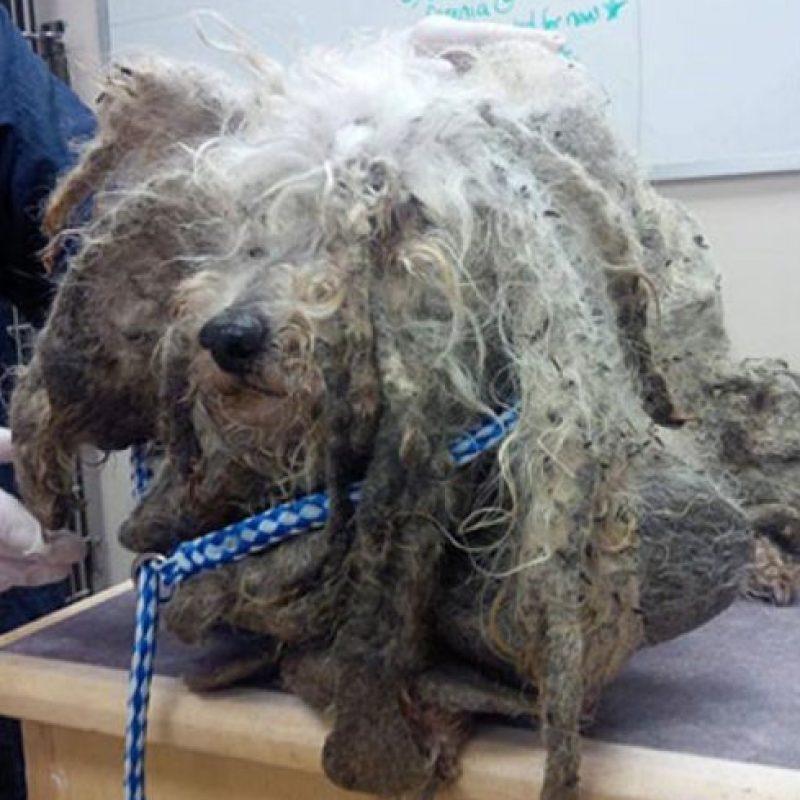 27. Antes Foto:Park Road Veterinary Clinic
