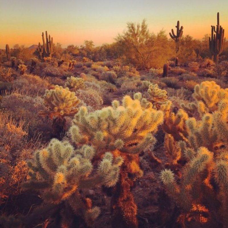 Tomada por Andrew P. en Phoenix, Arizona, con la cámara. Foto:Apple