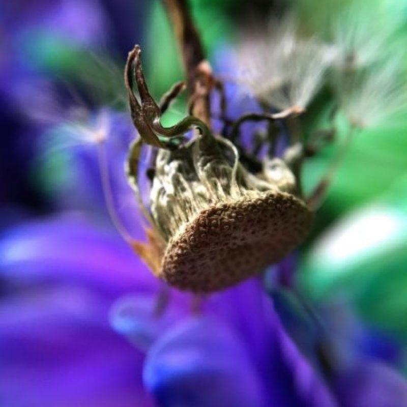 Tomada en Dawn D. en Portland, OR, con la cámara, Snapseed y lentes olloclip. Foto:Apple