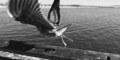Tomada por Markus S. en Venice Beach, California, con la cámara. Foto:Apple