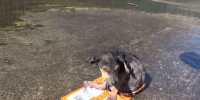 """Lo encontraron los voluntarios de """"Hope for Paws"""". Le cortaron una pata. Foto:Youtube/Hope for Paws"""