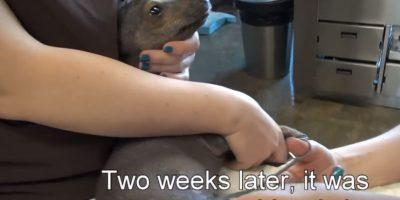 Su caso ha conmovido a miles de personas. Foto:Youtube/Hope for Paws