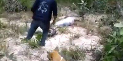 Un hombre encontró a una serpiente muerta en el campo. Foto:Liveleak
