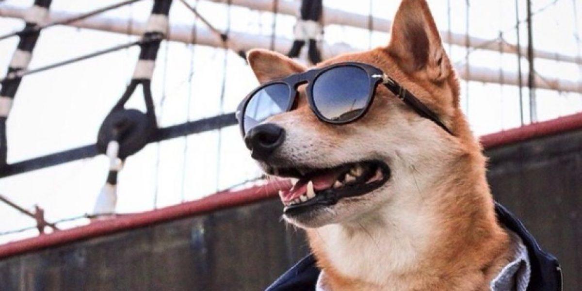 FOTOS: ¡Guau! Este perro se viste mejor que todos ustedes