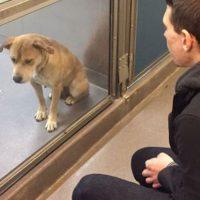 Quienes maltratan animales comienzan a hacerlo desde la niñez. Foto:Imgur