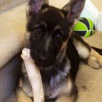 En España, por ejemplo, los animales más abandonados son los perros. Foto:Imgur
