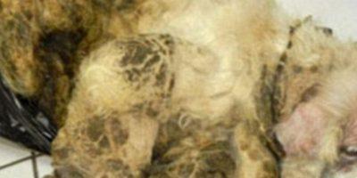 La tragedia de Sammy: Keith Morgan llevó a un perrito de 17 años de edad llamado Sammy a la Sociedad Humana, con evidentes signos de desnutrición.Pero no era todo: el perro estaba en tan mal estado que su pelo estaba pegado y con una pasta hecha por sus propias heces. Ni podía caminar. Morgan, supuestamente, era el héroe de la historia Foto:Facebook