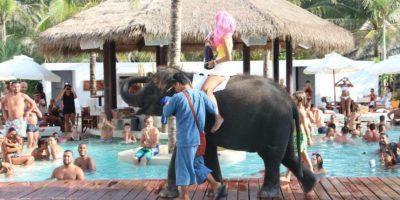 Foto:Vía Facebook / Wildlife Friends Foundation Thailand