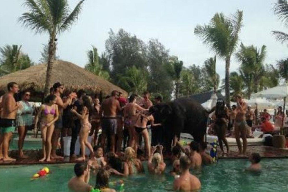 Posteriormente, Nikki Beach publicó en su cuenta de Twitter que el elefante estaba siendo vigilado por su cuidador. Foto:Vía Facebook / Wildlife Friends Foundation Thailand
