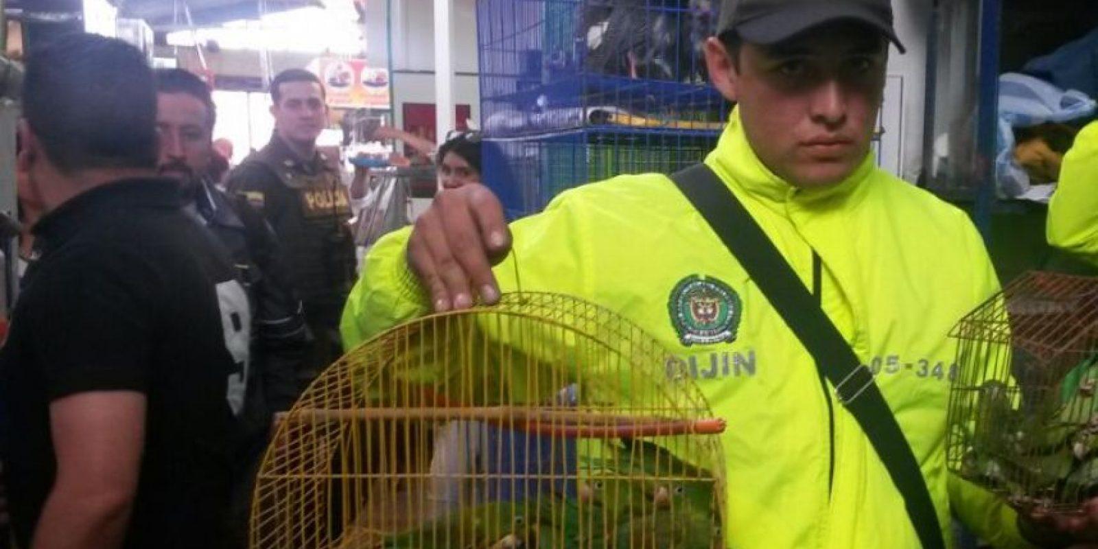 Animales recuperados por las autoridades Foto:Cortesía: Secretaria de Ambiente