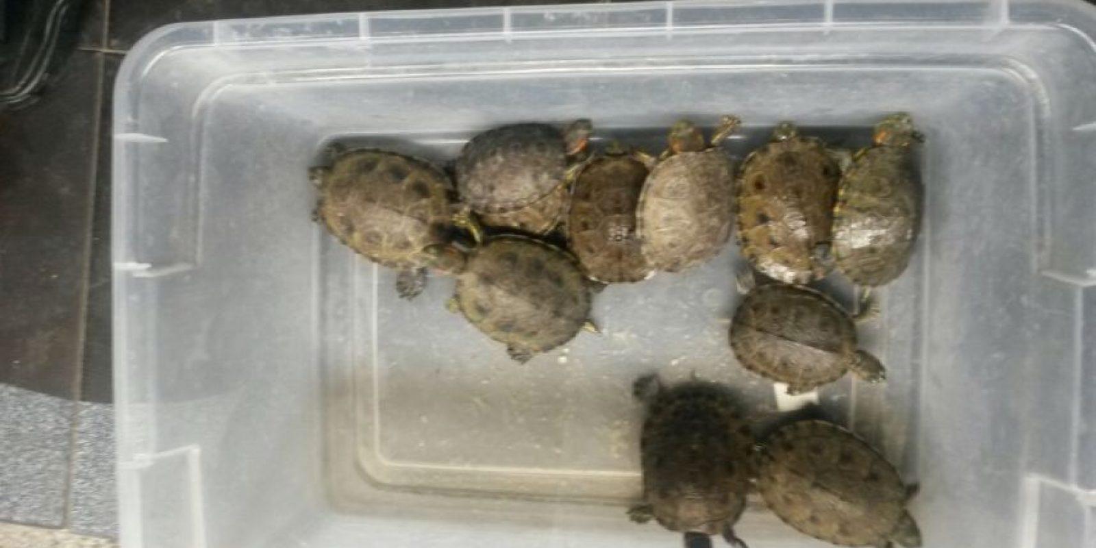 Algunas de las tortugas incautadas en Semana Santa Foto:Cortesía Secretaria de Ambiente