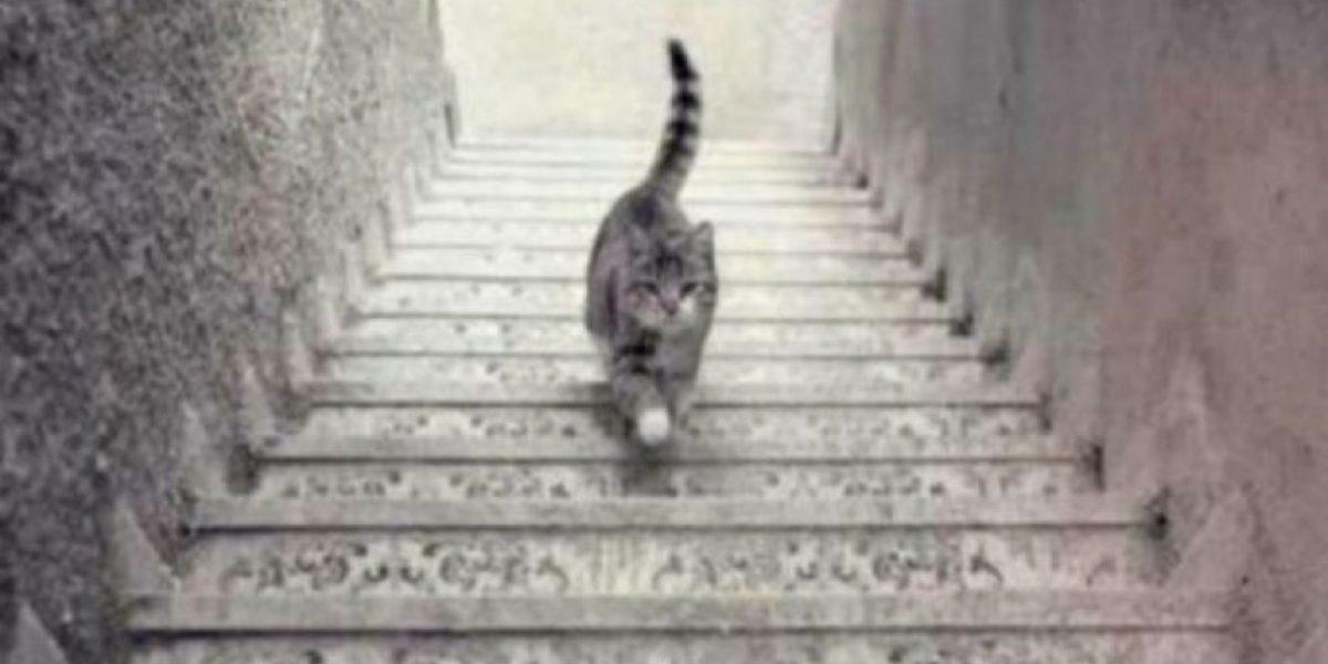 ¿Este gato sube o baja las escaleras? La nueva ilusión óptica que sorprende a Internet