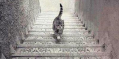 El gato que genera polémica en las redes sociales. Foto:Twitter