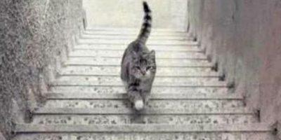 Muchos se confunden al conocer si sube o baja las escaleras. Foto:Twitter