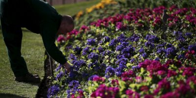Esta es la primera vez que los jardineros aparecieron en una lista de los trabajos mas felices del mundo Foto:Getty Images
