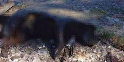 Sucedió en Melipilla, Chile. En este país hay consternación por lo que ocurrió, ya que quemaron a un perro en plena vía pública. No se sabe si se hizo cuando este estaba vivo o muerto, pero las autoridades investigan para hallar a los responsables de esta acción. Foto:vía Twitter/ @nd_locutor