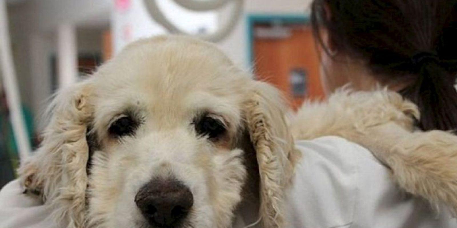 Fueron a la cárcel por seis meses y tuvieron que pagar una multa para rehabilitar al perro, al que ahora cuida otra familia. Foto:vía Facebook