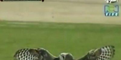 . Pateó a la lechuza: En 2011, se disputaba en el fútbol colombiano, el juego del equipo Junior contra el Deportivo Pereira. El delantero panameño Luis Moreno, vio a una lechuza que inesperadamente aterrizó en el campo. La pateó sin consideraciones y esto le provocó el odio de los hinchas, que comenzaron a lanzarle objetos. Foto:vía Canal RCN (Colombia)