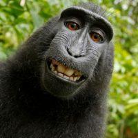 Selfie Foto:Wikipedia