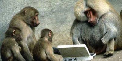 También les interesa la tecnología Foto:Flickr/photos/fncll