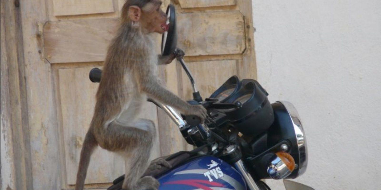En moto Foto:Flickr/photos/sujuhyte