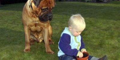 Foto:Dogguie.net