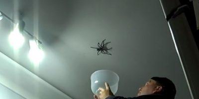 """Estaba decidido a """"atrapar"""" a la cazadora que se metió a su casa. Foto:vía Youtube/Leokimvideo"""