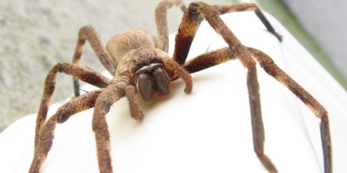VIDEO: ¡Horrible! Así salta araña gigante sobre hombre que quiere atraparla