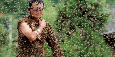 Aproximadamente la tercera parte de todos los alimentos de hombre son polinizados, principalmente por abejas Foto:Getty Images
