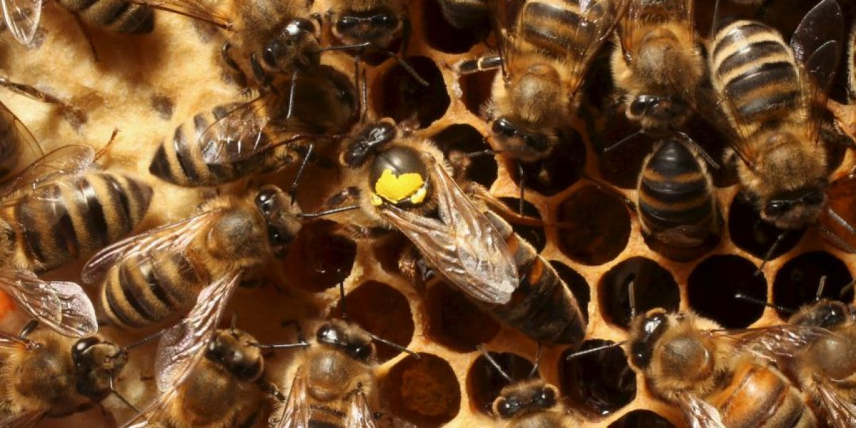 ¡Pobre! Reportero fue atacado por abejas en plena transmisión