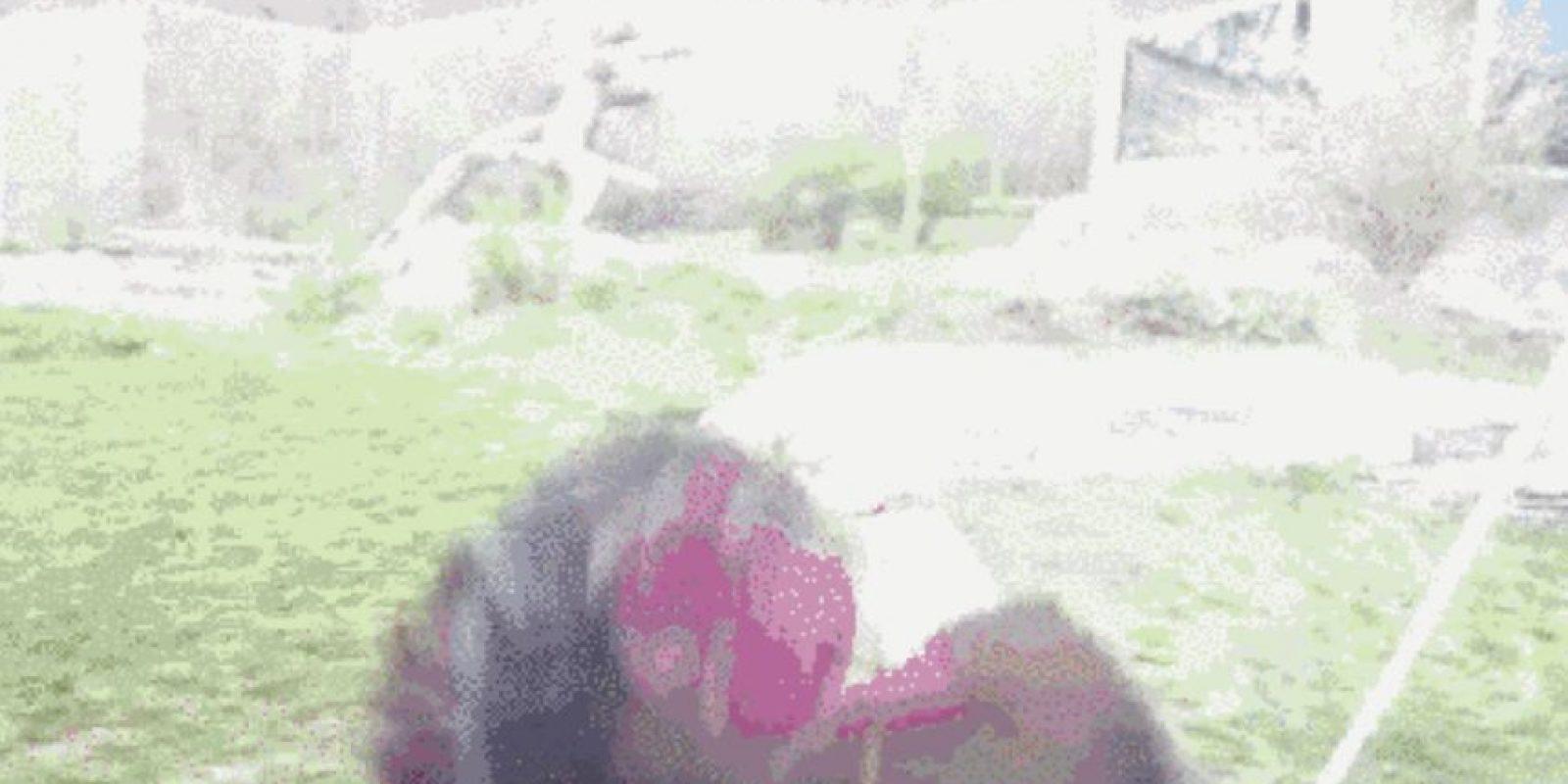 Esto es un símbolo de dominio para los gorilas Foto:vía Youtube /Bull Dogg
