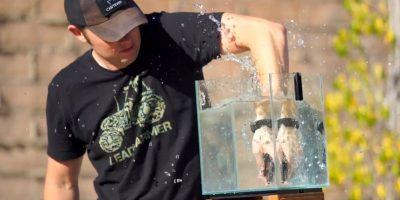 Al ser tirado en agua y sacado inmediatamente. Foto:FullMag qqop