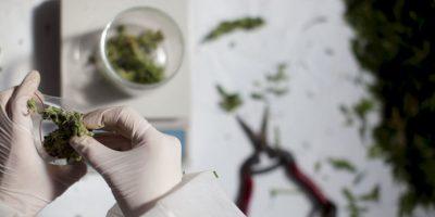 La Encuesta Nacional sobre Uso de Drogas y la Salud 2009 reveló que en Estados Unidos, 20 millones 500 mil personas habían consumido marihuana al menos una vez durante el año anterior a la encuesta. Foto:Getty