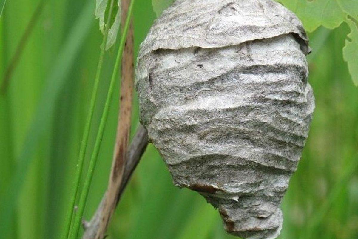 10. Un shock anafiláctico puede ocurrir por picadas de insectos, alergias a alimentos o alergias a medicamentos. Foto:Vía Wikimedia Commons