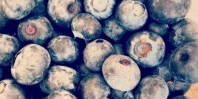 7. Los arándanos tienen propiedades restauradoras en los niveles de antioxidantes, ayudan a revertir el declive cerebral propiciado por la edad y, además, previenen infecciones urinarias. Foto:Tumblr.com/tagged-frutas