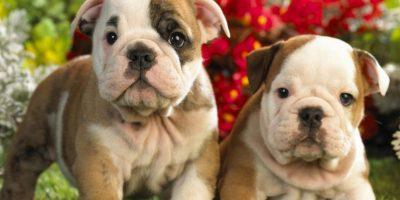 4. Dejó a su novio porque este tenía muchos perros Foto:Wikimedia