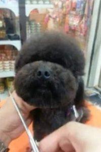 El creador de este nuevo estilo tiene un canal en Youtube, donde muestra el resultado de perros con cabezas cuadradas y circulares. Foto:gamme