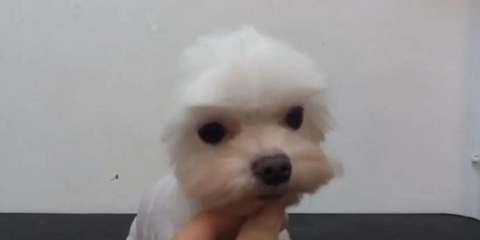 Foto:Vía Youtube/mthedogm
