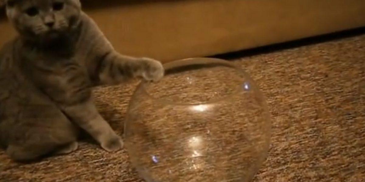 VIDEO: Gato elige un extraño lugar para descansar